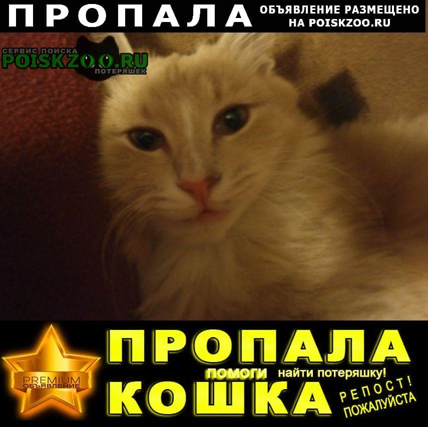 Пропала кошка котик. в деревне мамоново. г.Одинцово