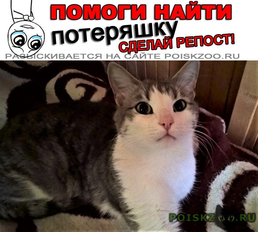Пропал кот г.Малаховка