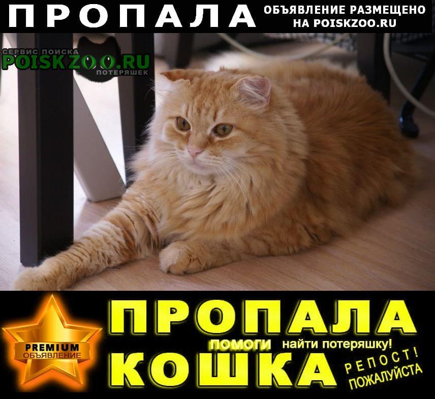 Пропал кот рыжий Чехов
