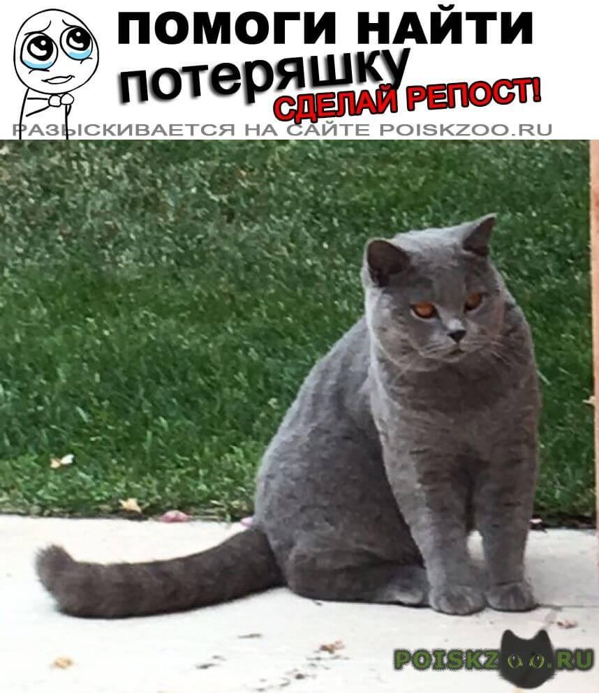 Пропал кот г.Пушкино