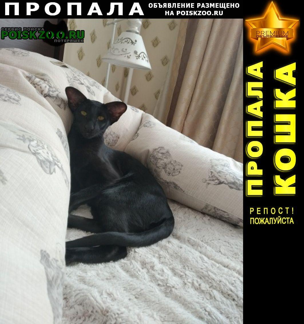 Пропала кошка ул. политкаторжанская г.Клязьма