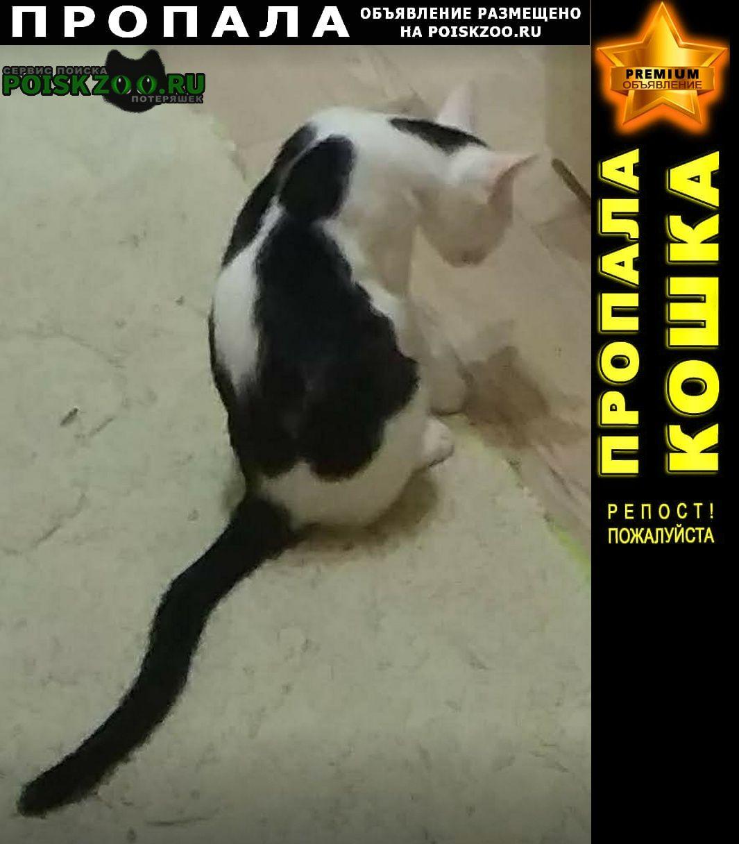 Раменское Пропал кот черно-белый