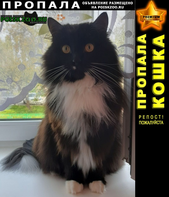 Тюмень Пропал кот