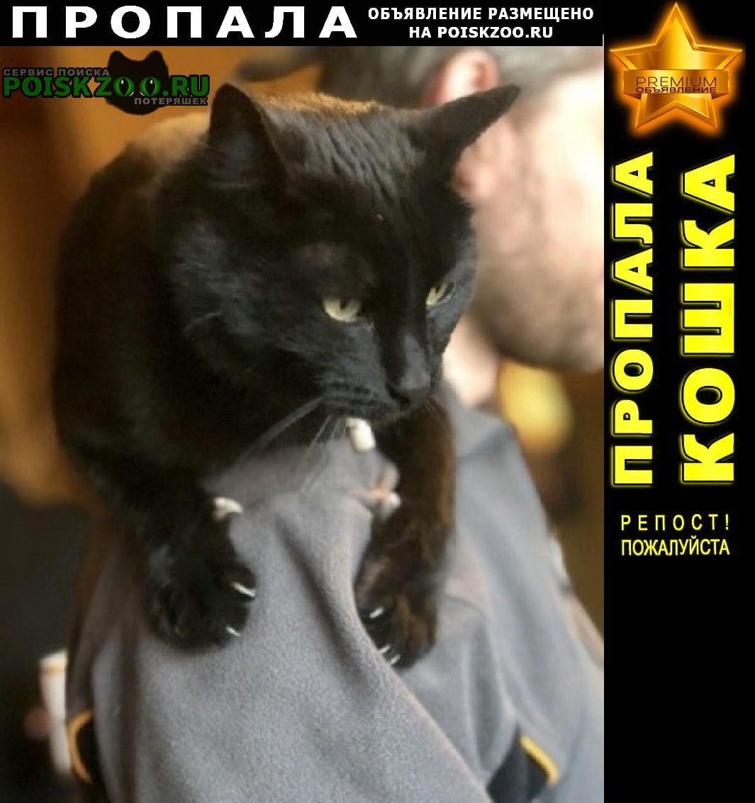 Пропал кот, кличка саймон г.Пермь