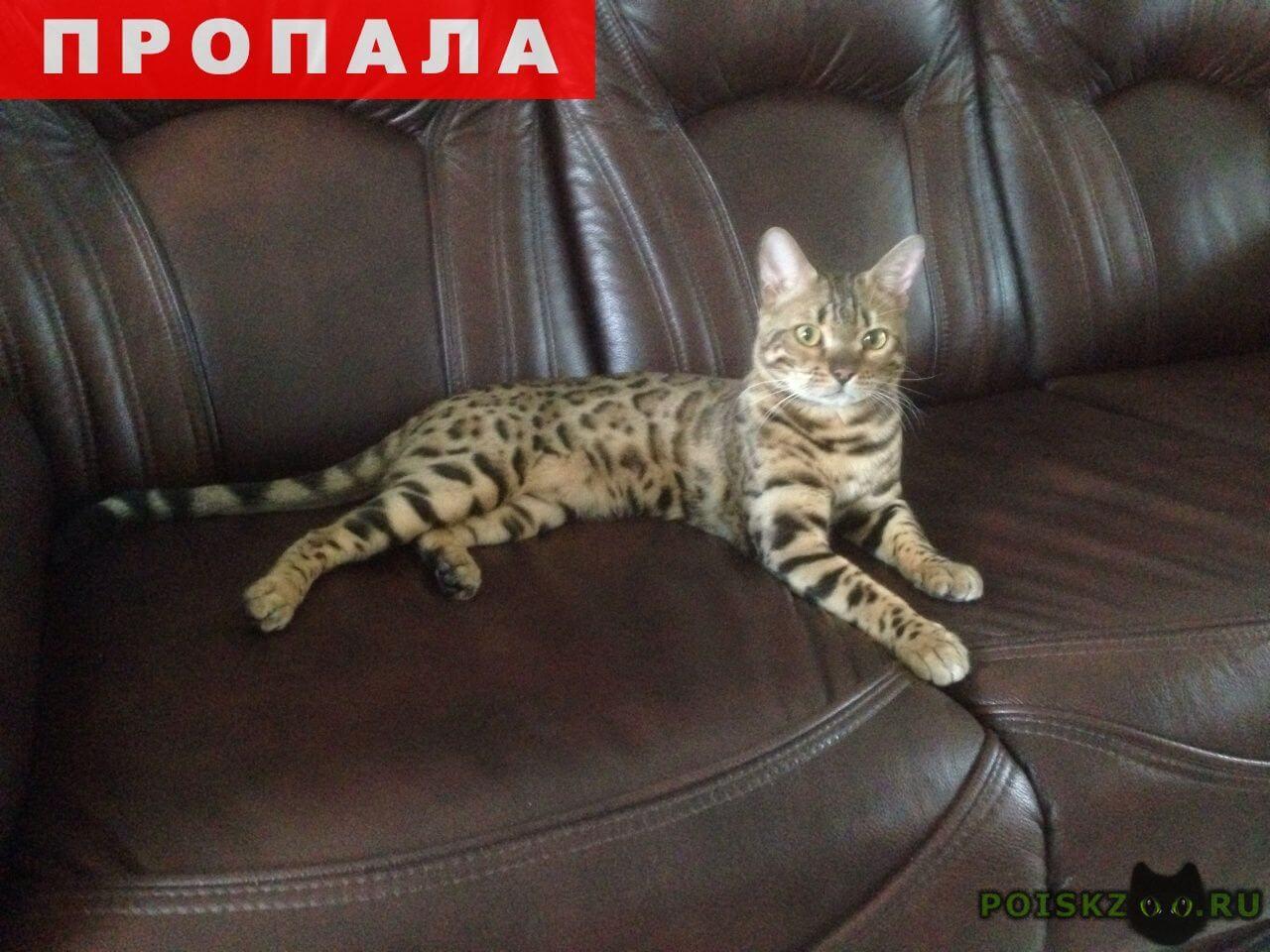 Пропал кот бенгальский г.Екатеринбург
