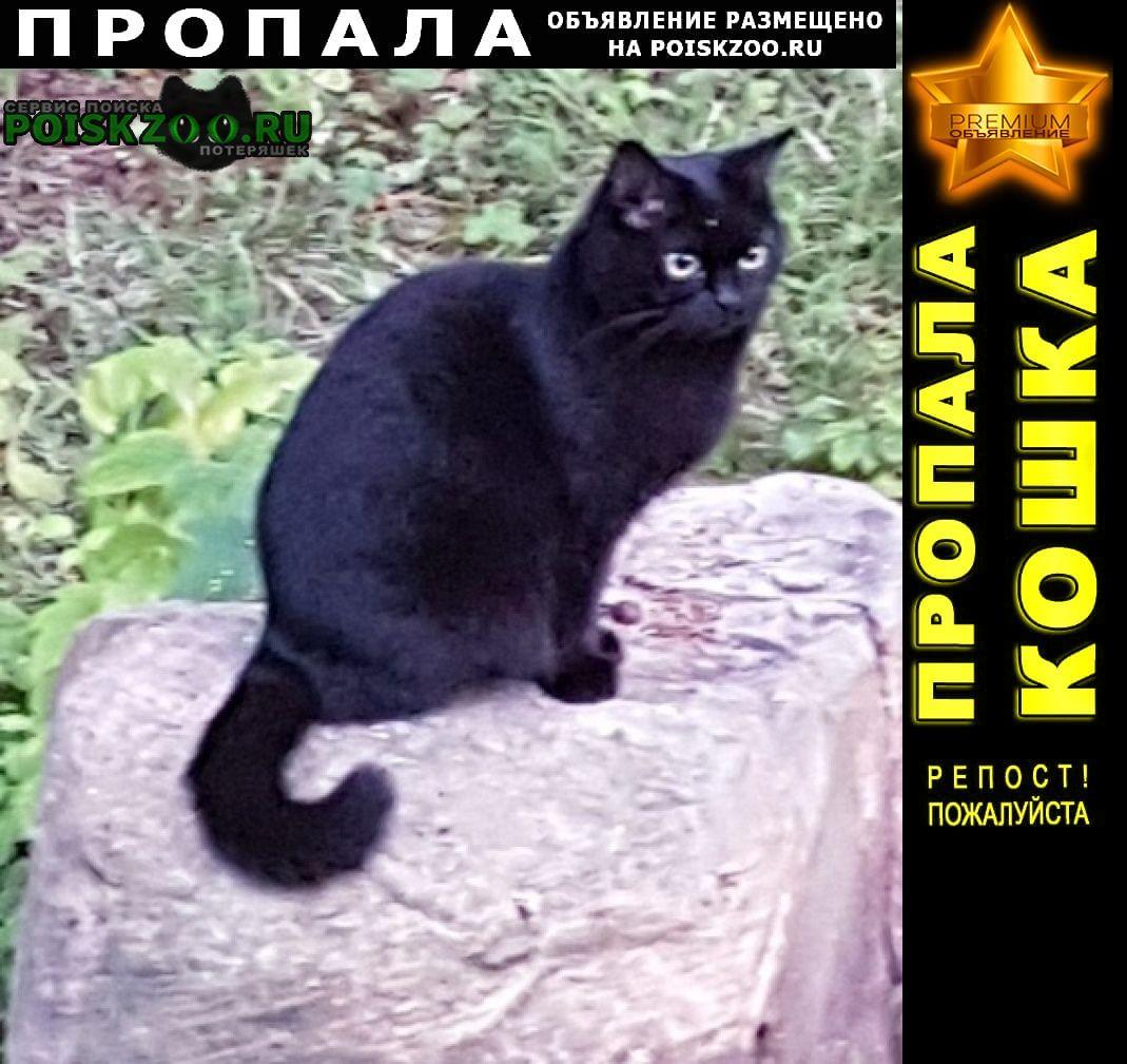 Пропала кошка чёрная в р.п. быково Быково (Московская обл.)