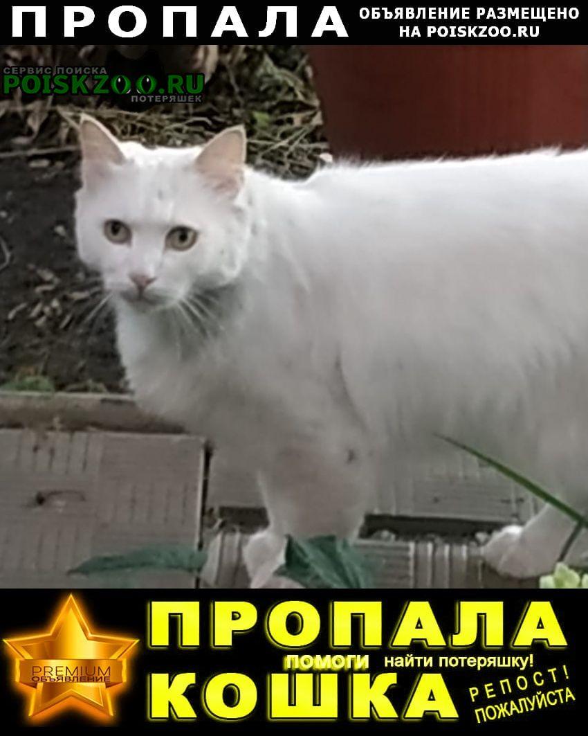 Пропал кот кастрированный, неконтактный, Тамбов