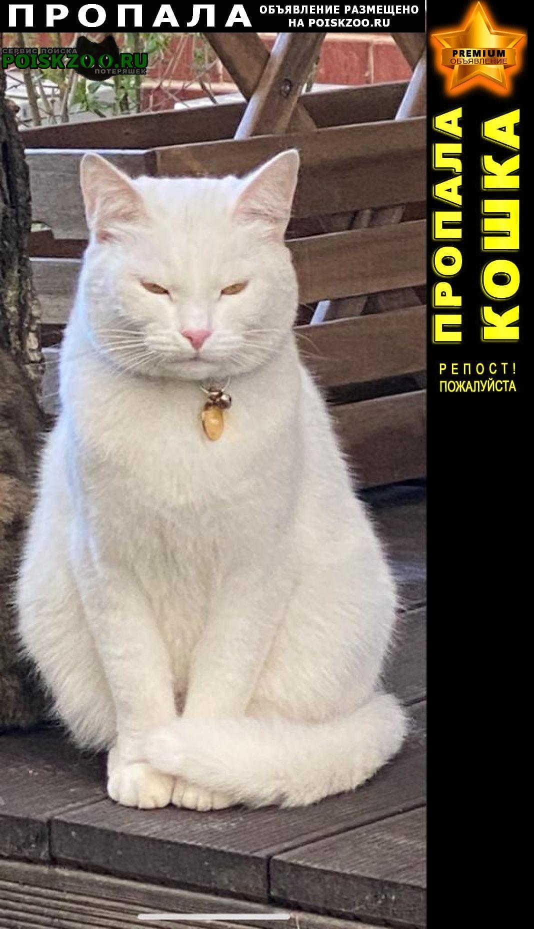 Московский Пропала кошка полностью белая с ошейником, медалькой с
