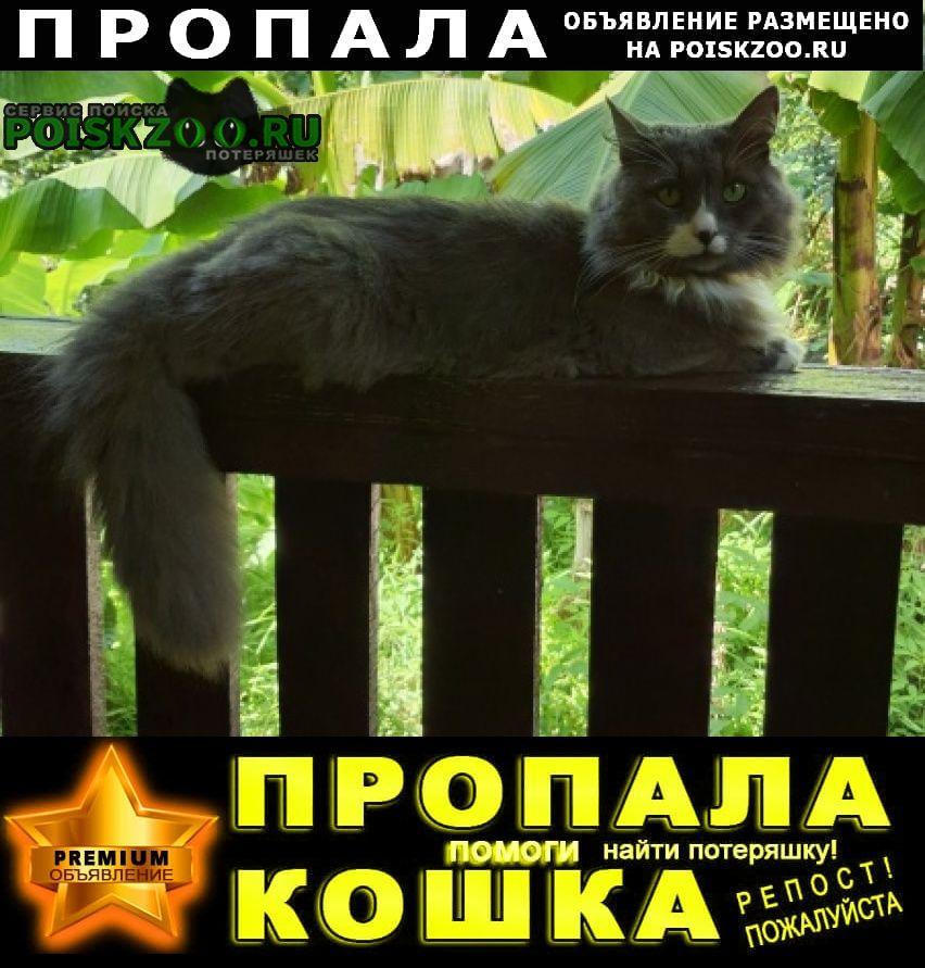 Пропал кот Лазаревское