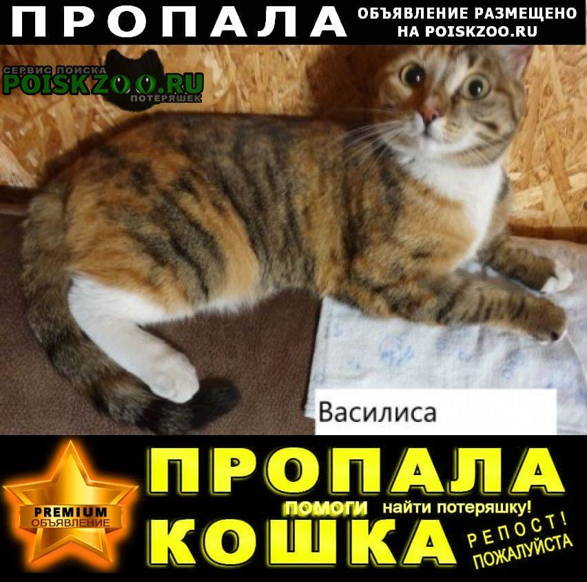 Пропала кошка василиса, стерилизована Томск