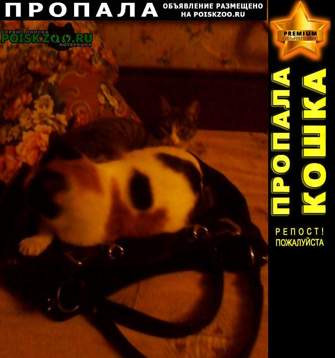 Пропала кошка на фото пропавшая на втором плане Одинцово