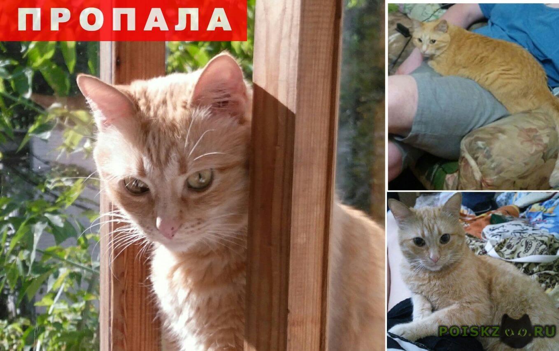 Пропал кот кузя (беспородный метис) г.Москва