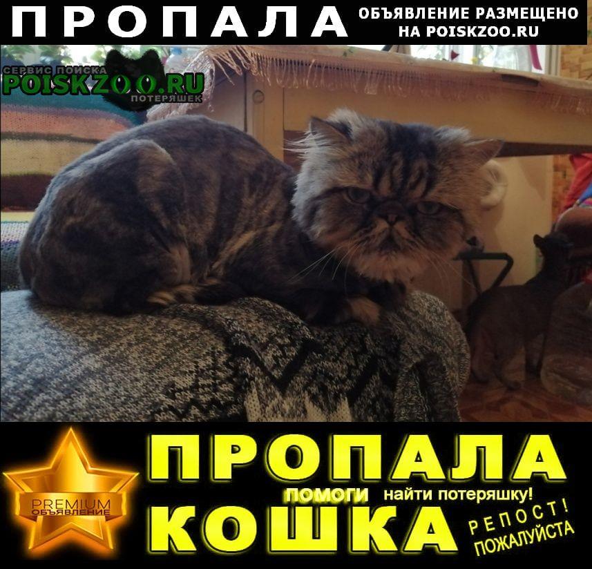 Пропала кошка кот, породы перс-экзот Новороссийск