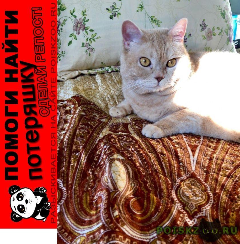 Пропала кошка член семьи помогите найти г.Симферополь