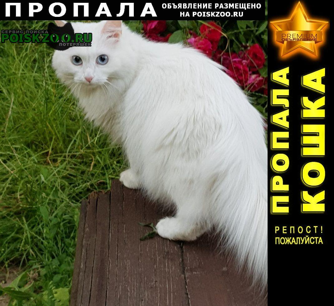 Пропала кошка белая Нижний Новгород