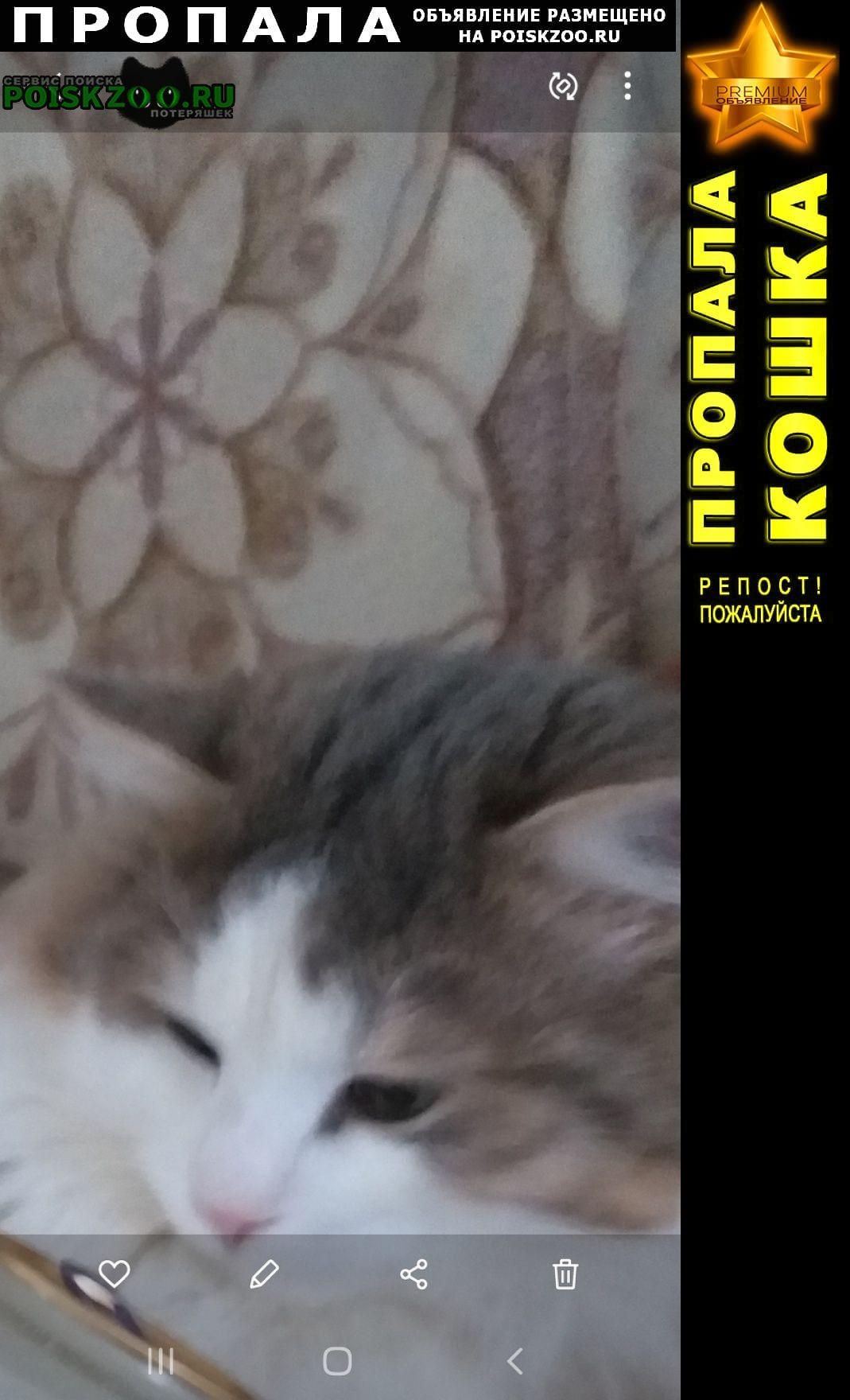 Пропала кошка кот. Можайск
