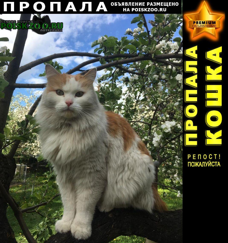 Пропал кот по кличке мартин Быково (Московская обл.)