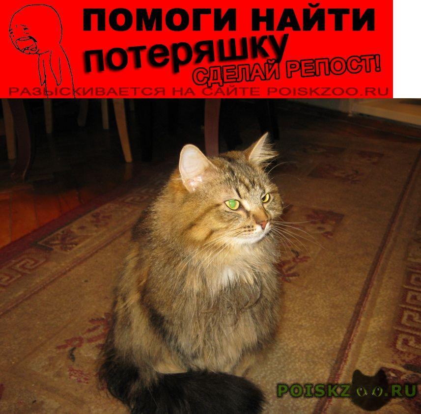 Пропала кошка г.Гатчина