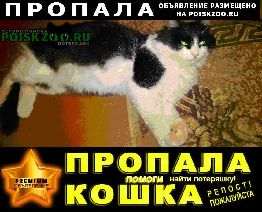 Пропал кот черно-белый пушистый Пермь