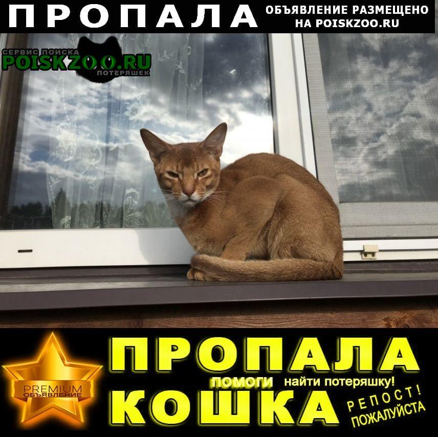 Пропал кот рыжик г.Электроугли