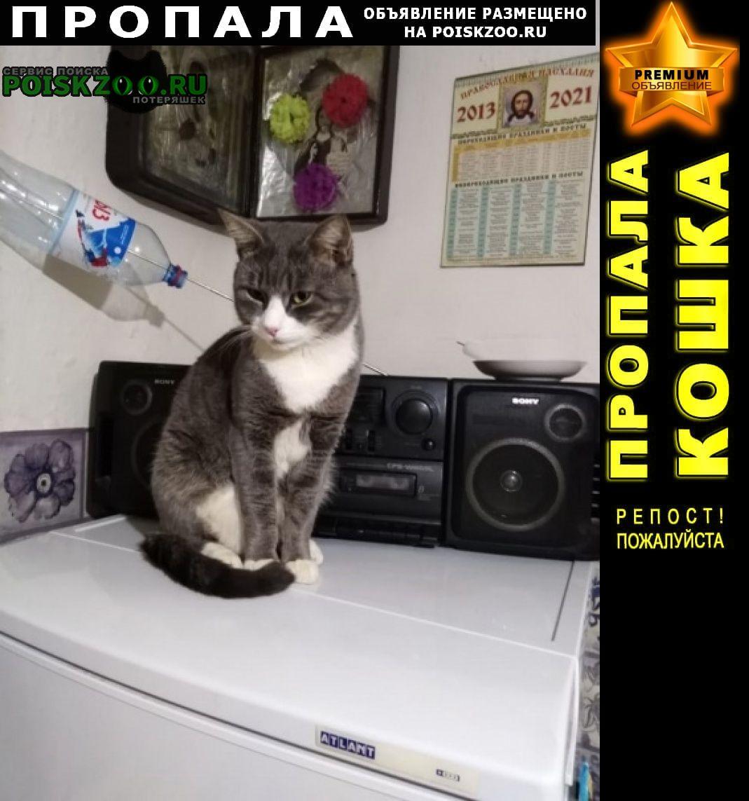 Пропал кот Кимры
