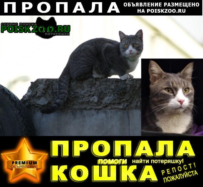 Кимры Пропал кот