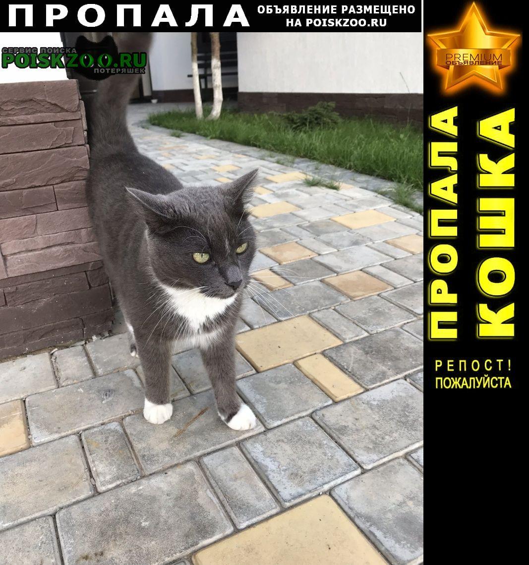 Пропала кошка кот Красногорск