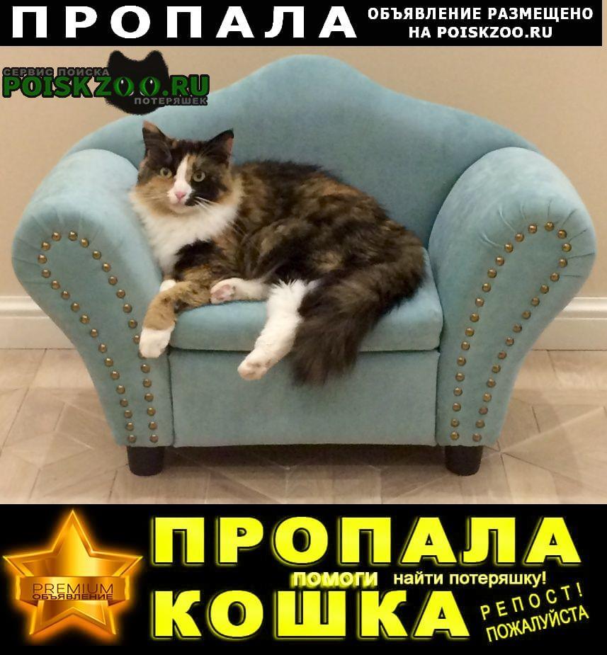 Пропала кошка алиса Москва
