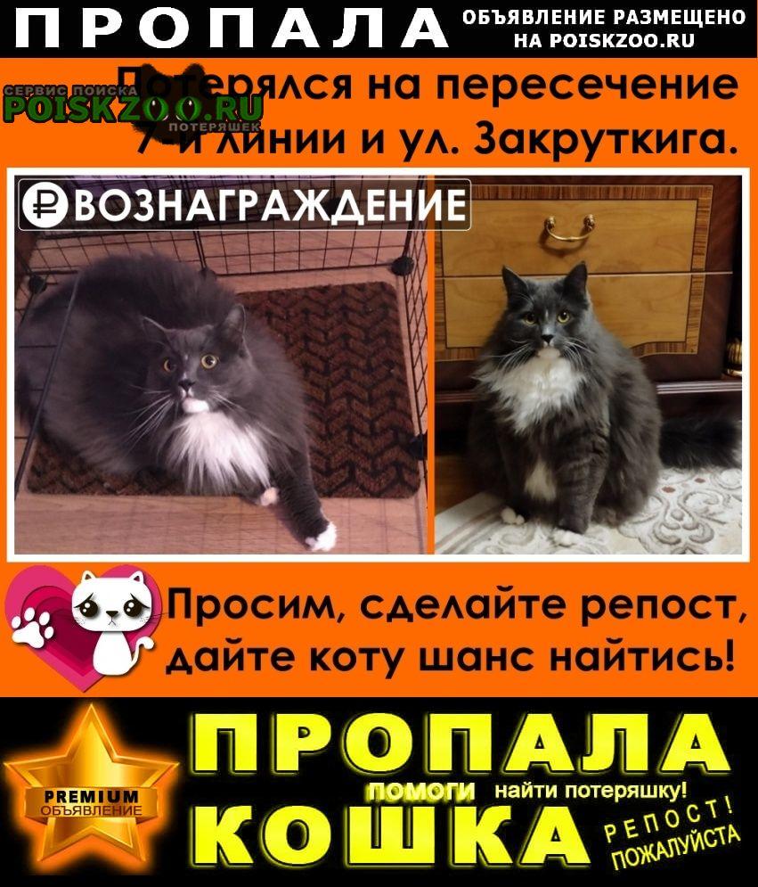 Пропал кот помогите найти вознаграждение Ростов-на-Дону