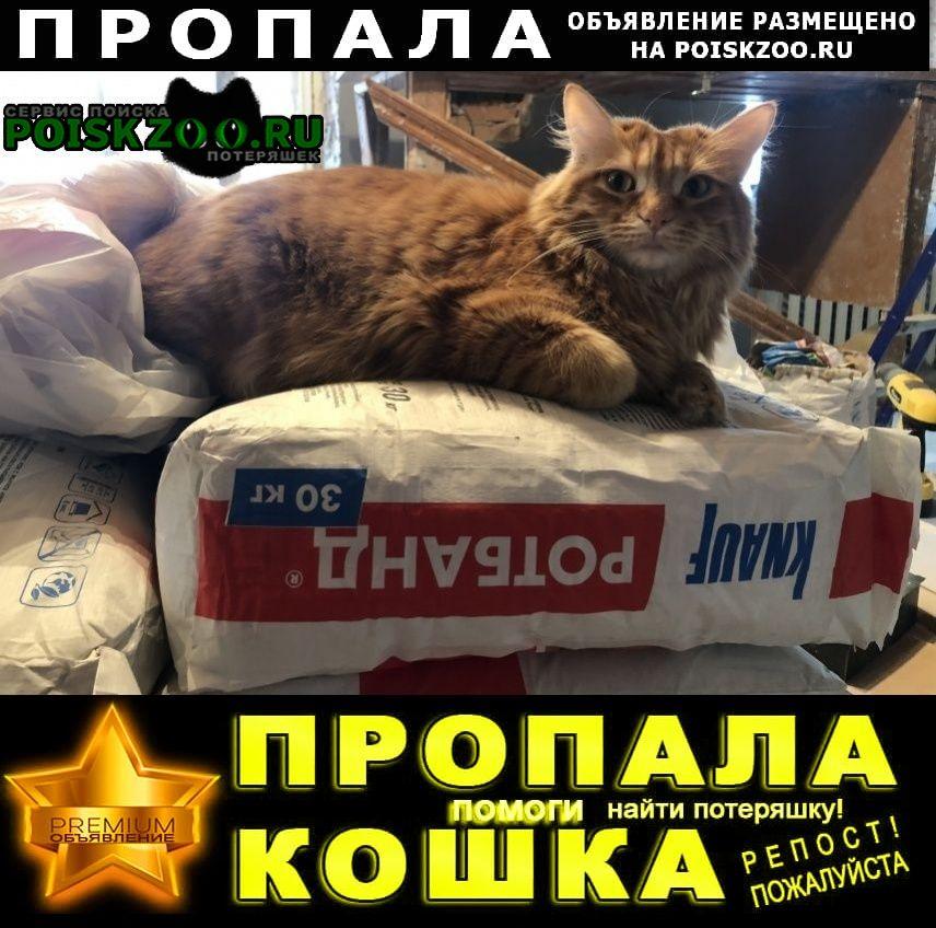 Пропала кошка   г.Сергиев Посад
