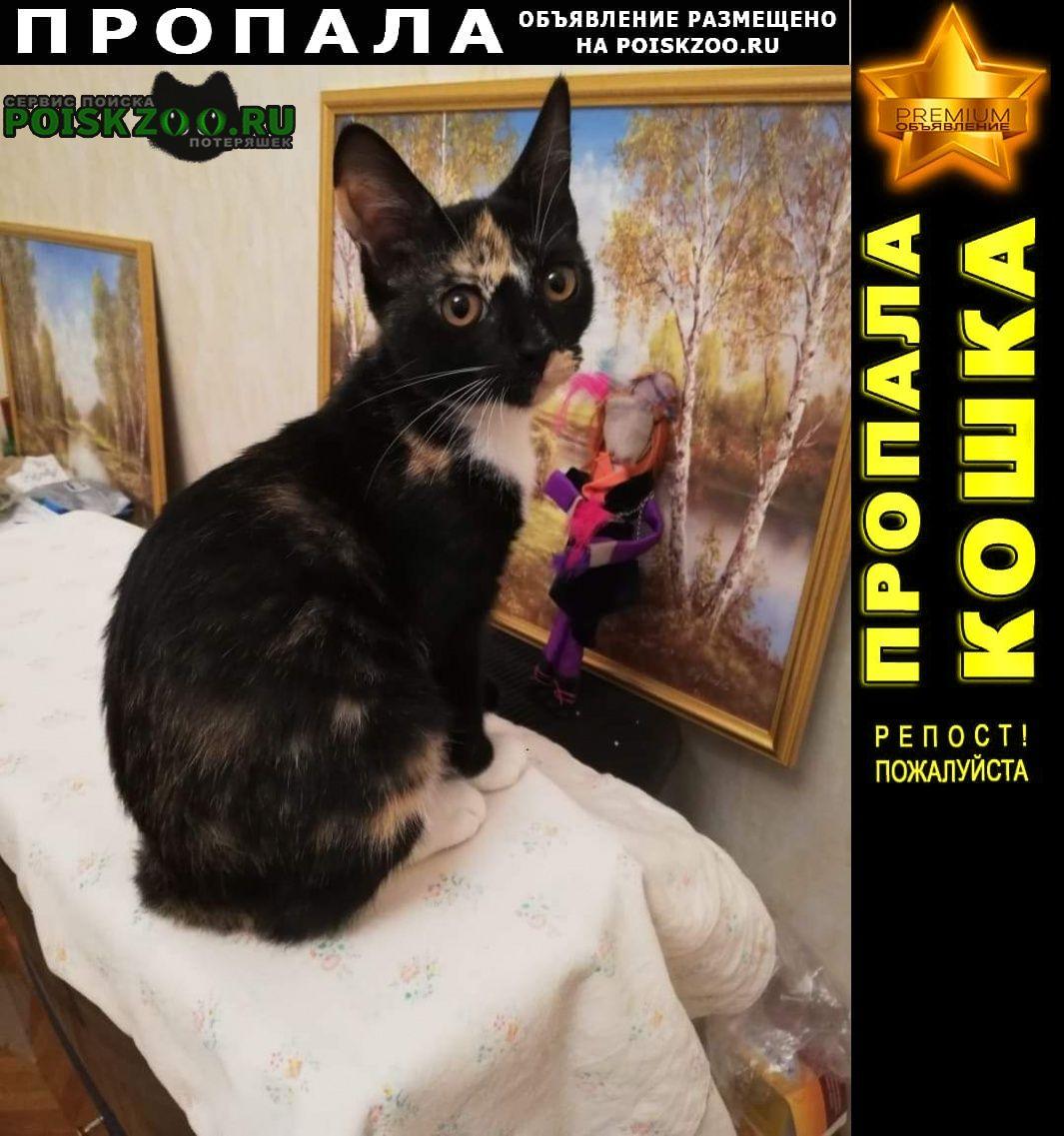 Пропала кошка около пансионата нева 4 ноября Сочи