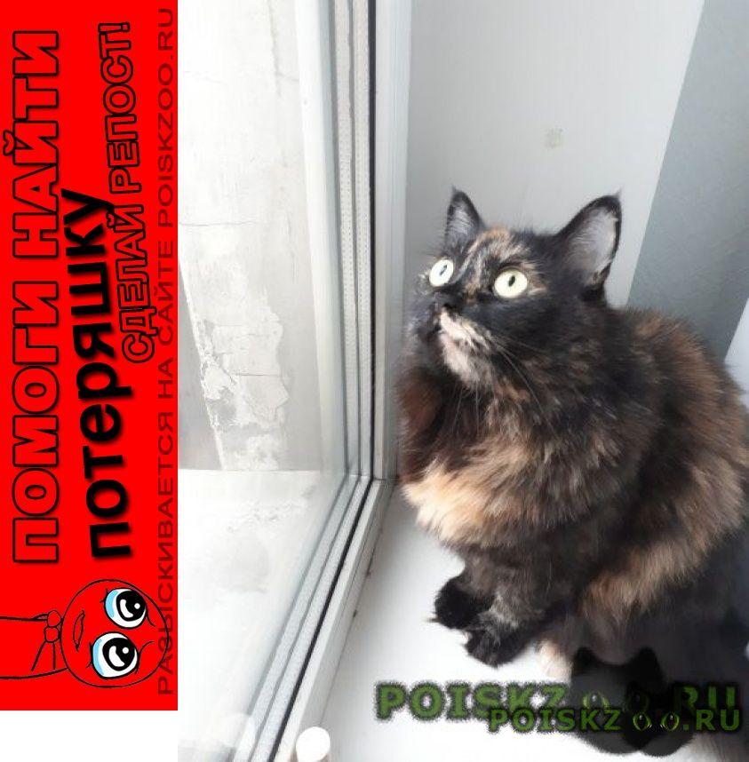 Пропала кошка г.Ставрополь