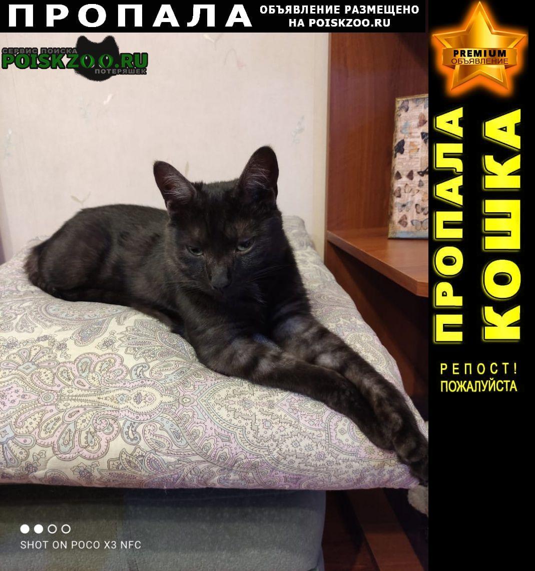 Пропал кот черный с серым подпушком Чехов