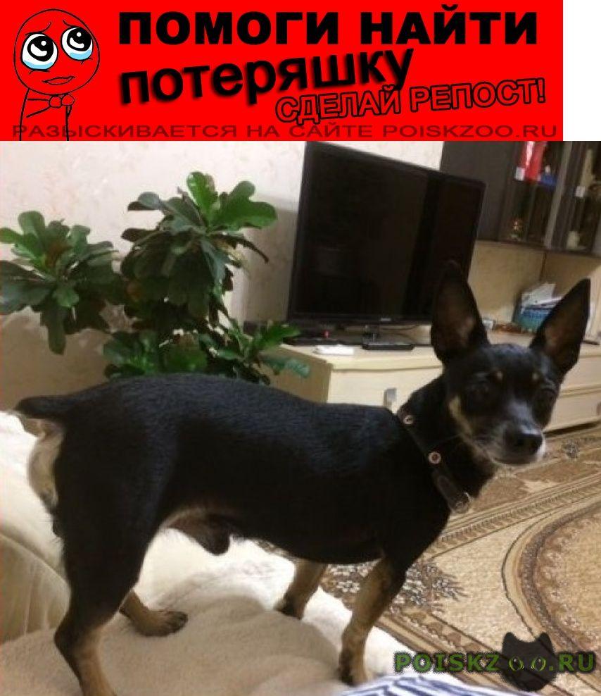 Пропала собака кобель вознаграждение гарантируем г.Волгоград