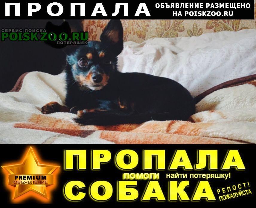 Пропала собака кобель помогите вернуться домой Нижние Серги