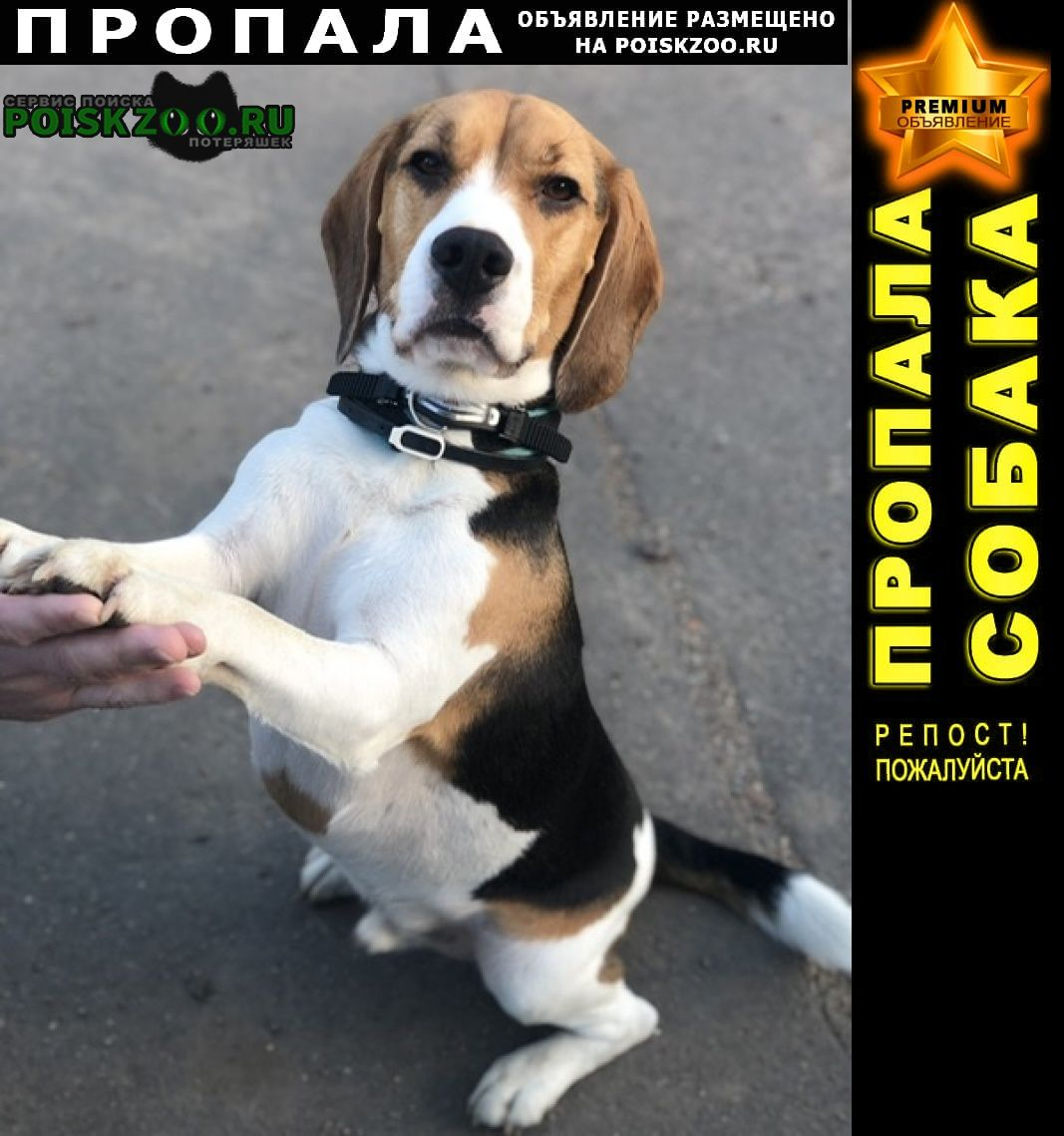 Пропала собака кобель возможно попал под машину Луга