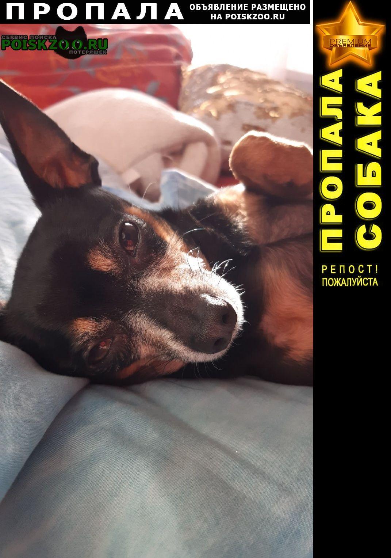 Пропала собака кобель помогите найти любимого друга Улан-Удэ