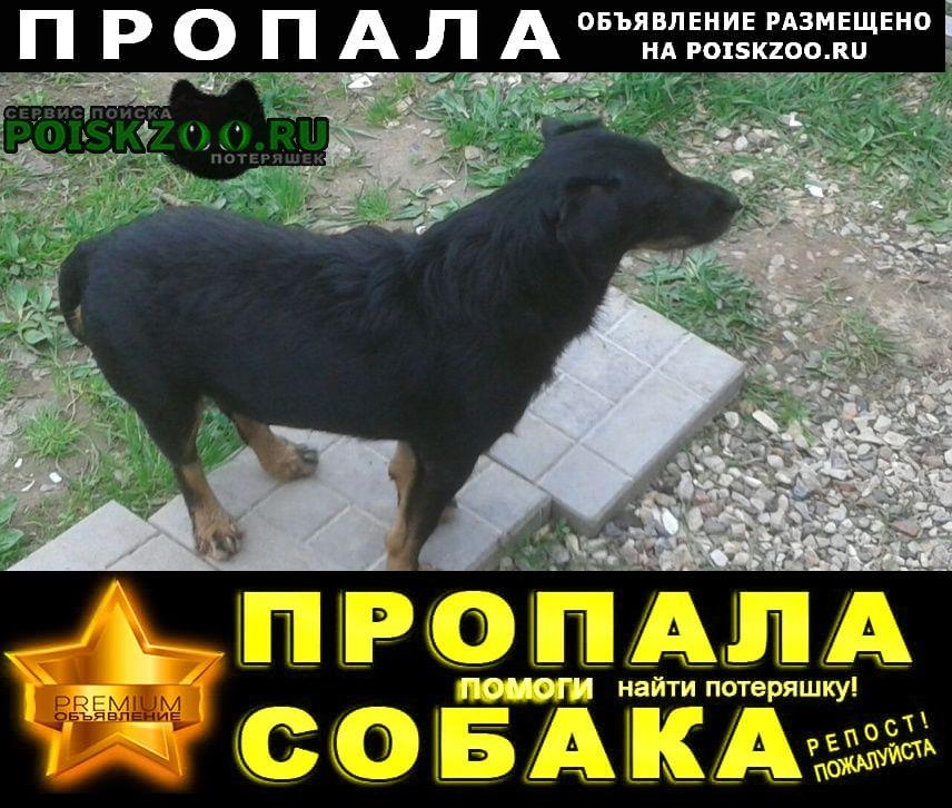 Пропала собака ягдерьер г.Медынь