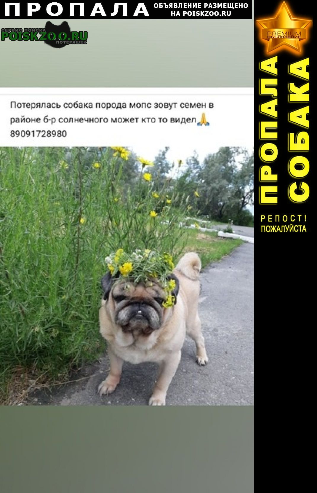 Курган Пропала собака кобель