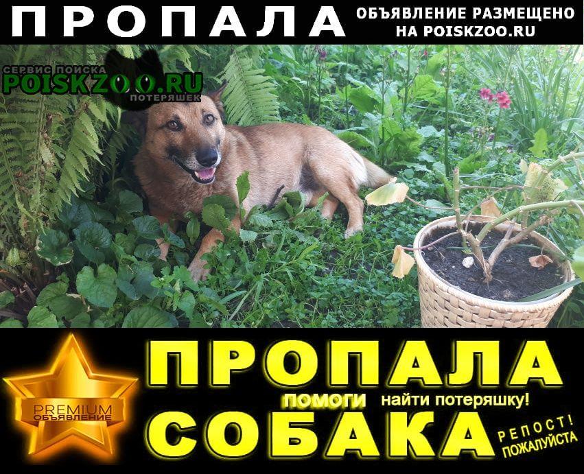 Пропала собака кобель Кисловодск