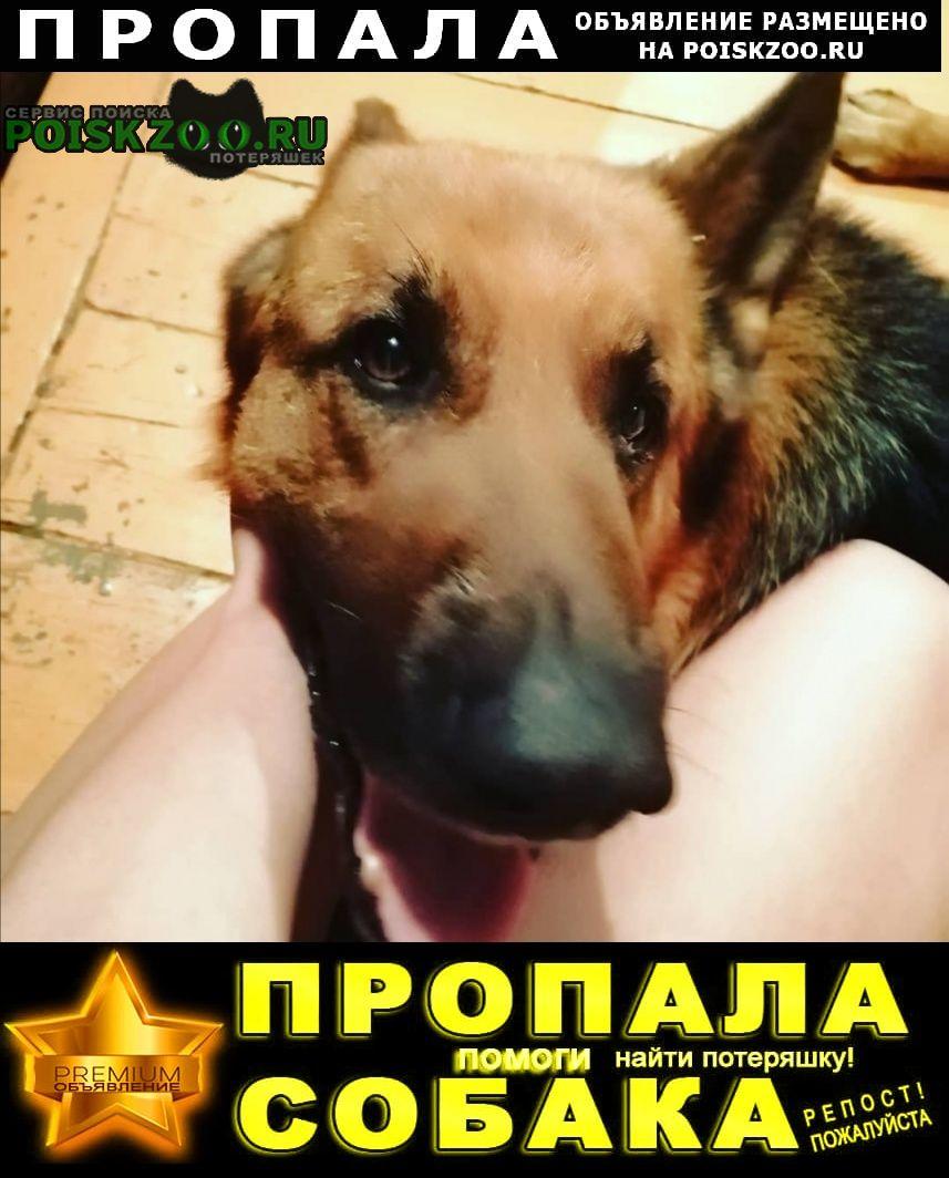 Улан-Удэ Пропала собака кобель немецкая овчарка