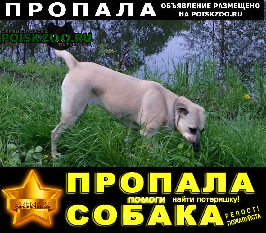 Пропала собака маруся Подольск