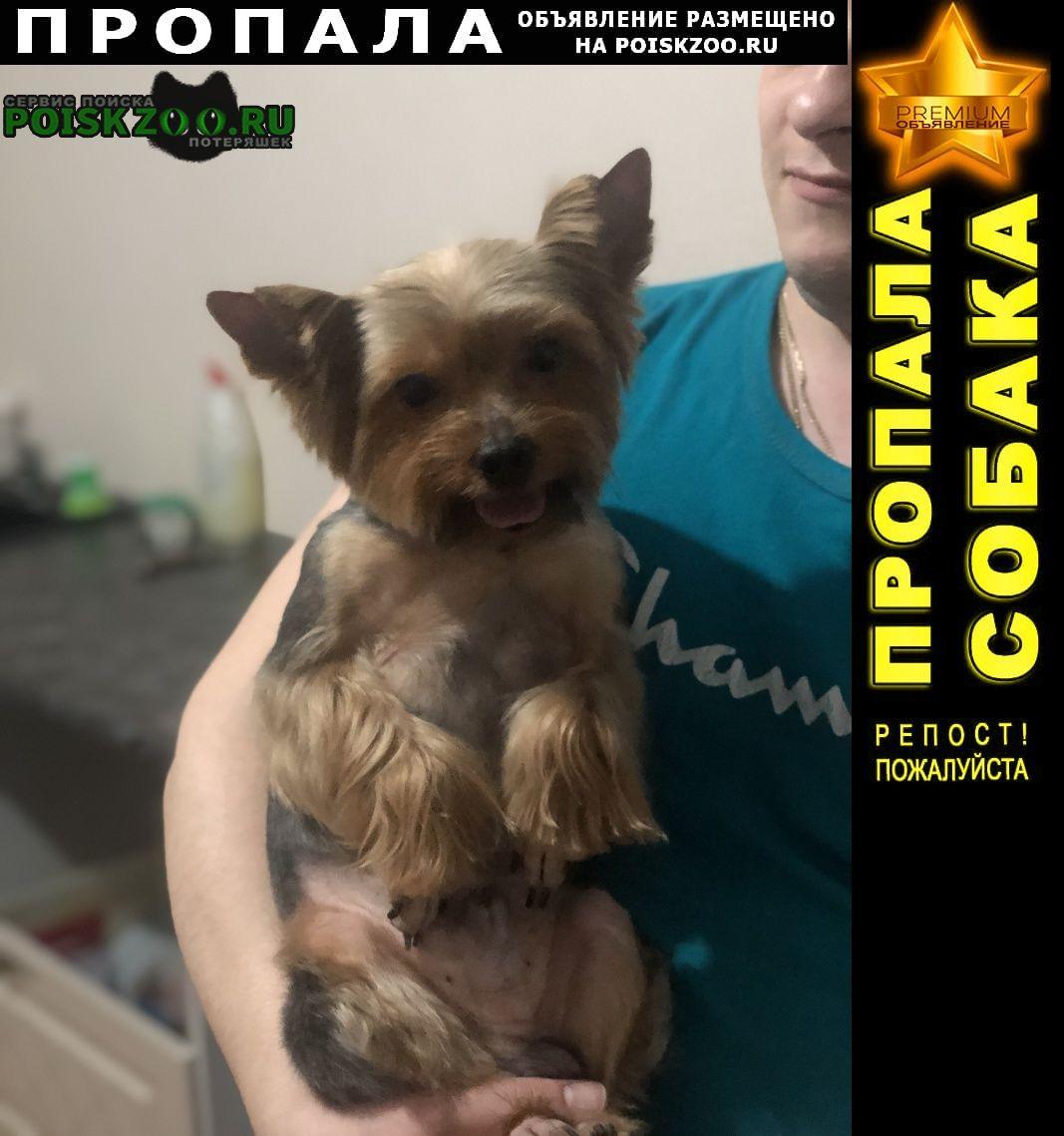 Пропала собака вознаграждение Богородск