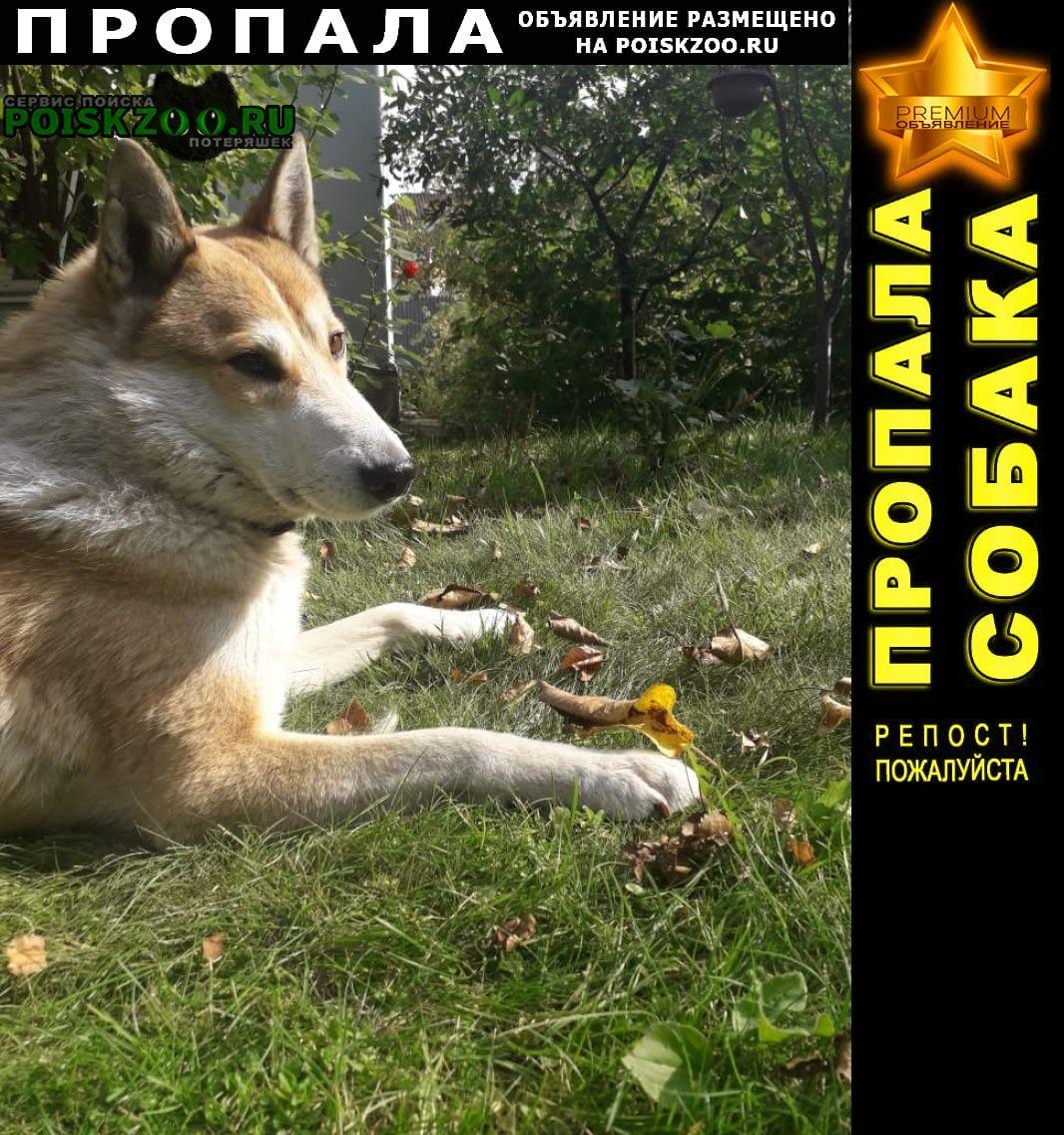 Пропала собака помогите найти собаку Немчиновка