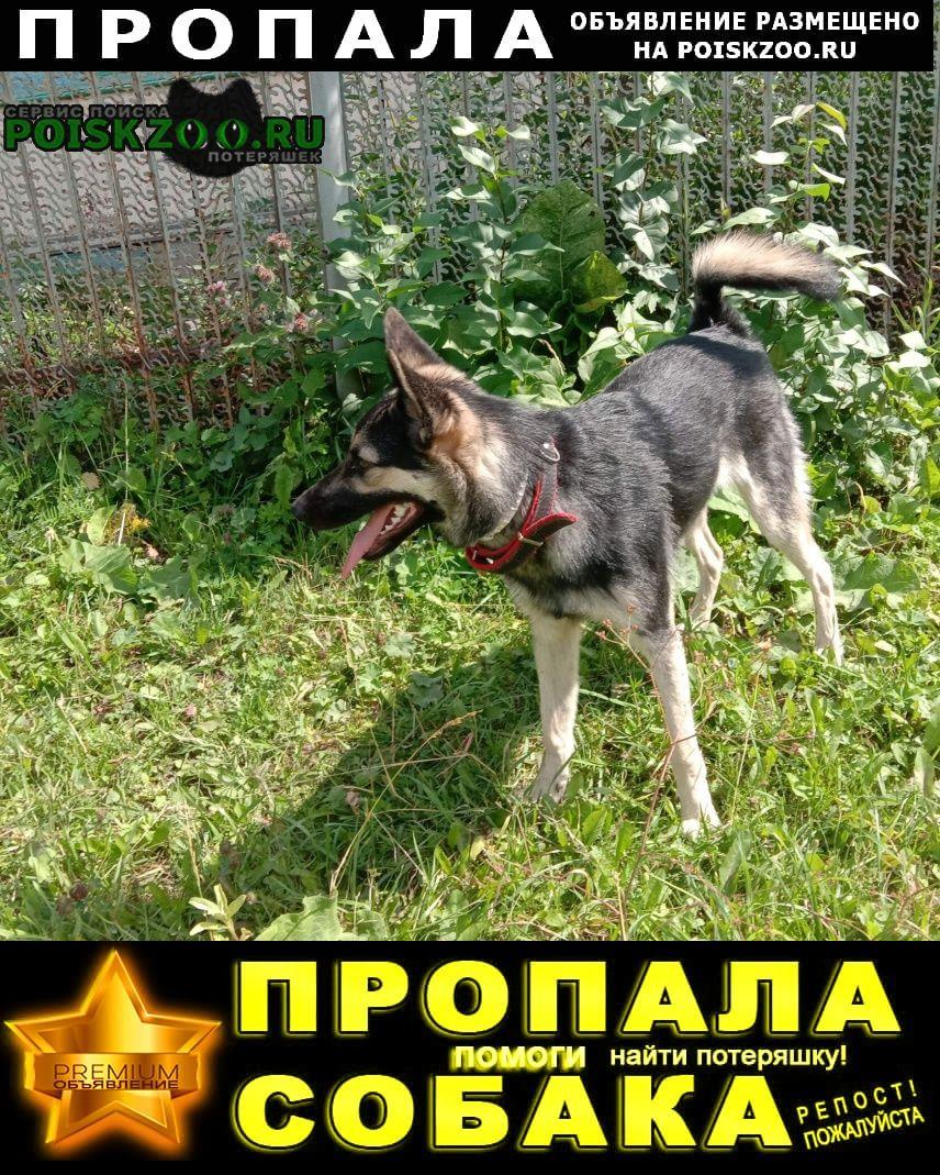 Пропала собака в поселке атиг Нижние Серги