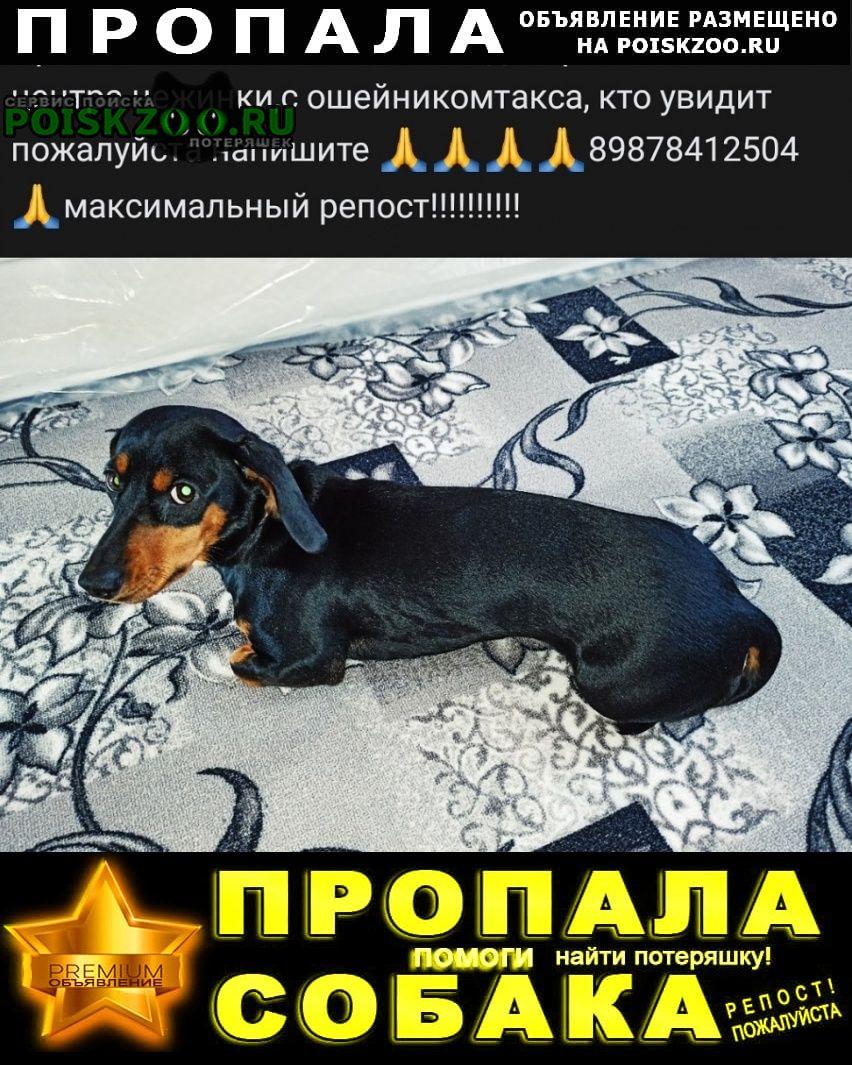 Пропала собака помогите найти любимицу Оренбург