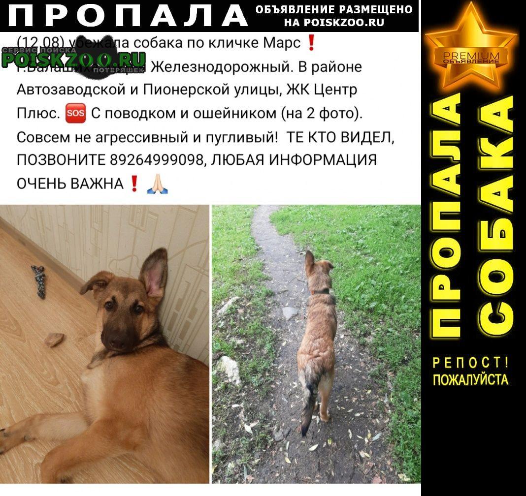 Пропала собака Железнодорожный (Московск.)