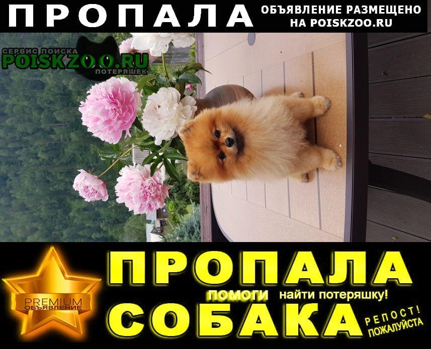 Пропала собака Дивногорск