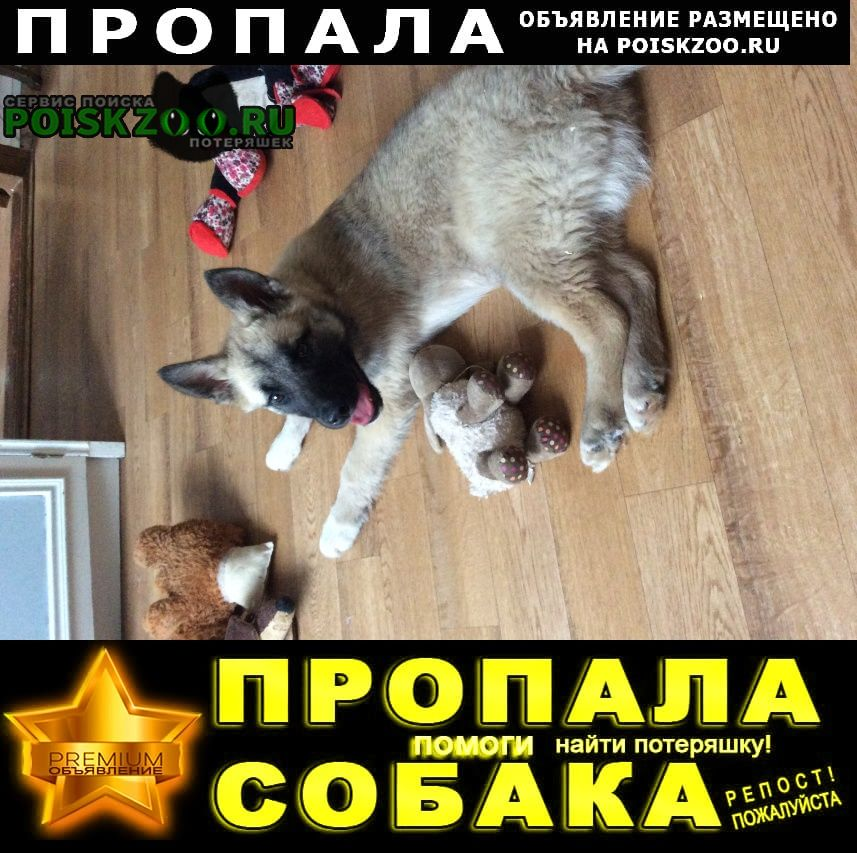 Пропала собака Нижний Новгород