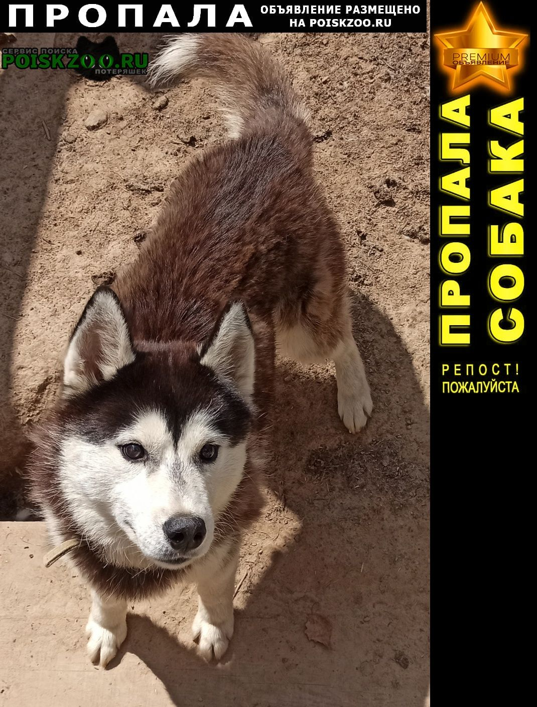 Пропала собака Городец